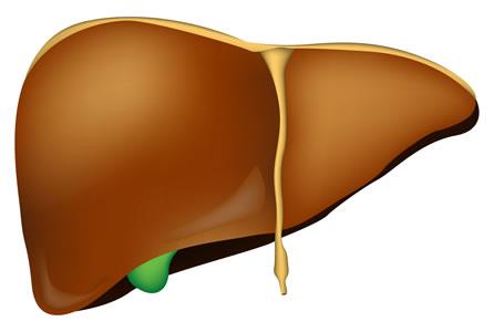 En god leverfunksjon er grunnlaget for en god fordøyelse - bestill Livogard idag!